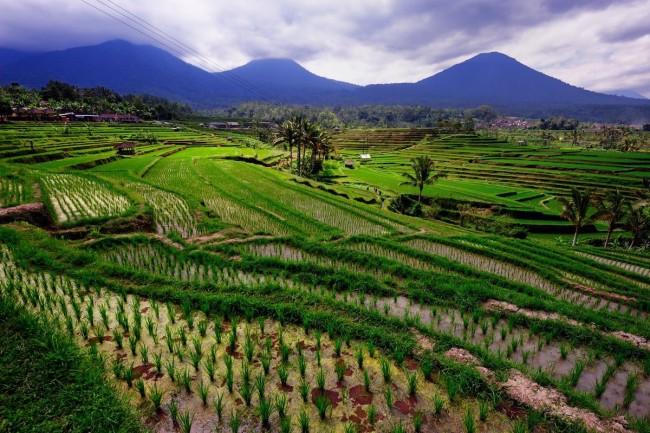 Отдых на Бали – неимоверные впечатления, которые останутся на всю жизнь