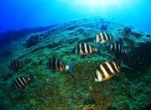 Остров Иерро подарит приют и покой
